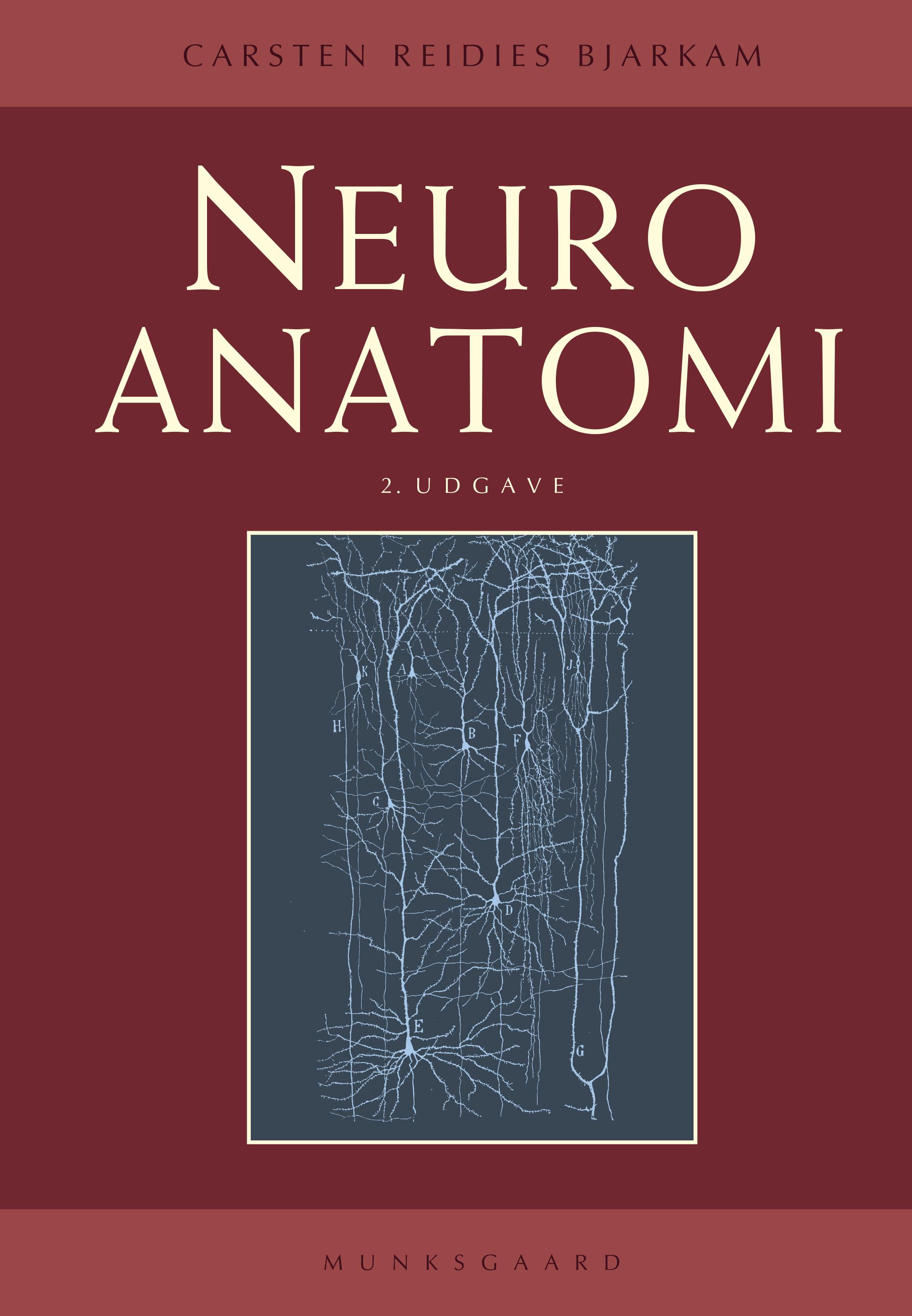 Neuroanatomi